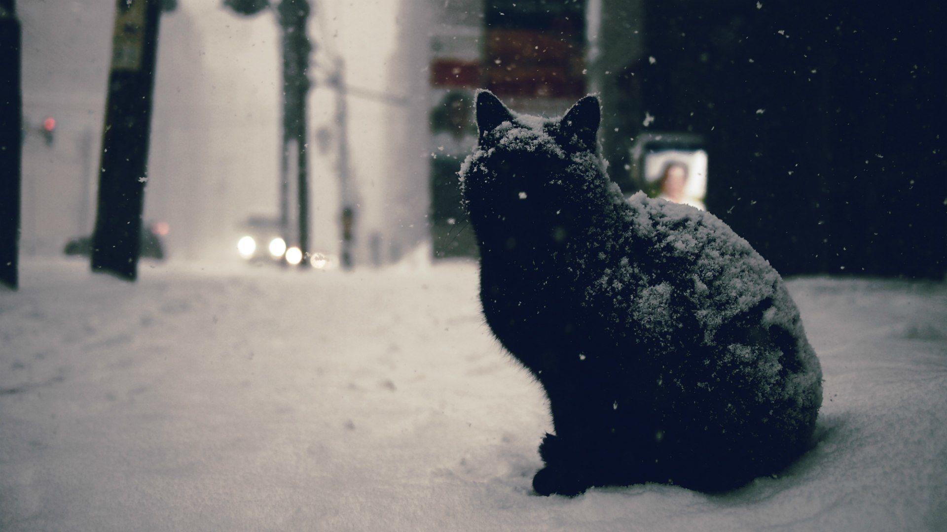Black Cat Street Winter Snow Christmast Alone Abandoned