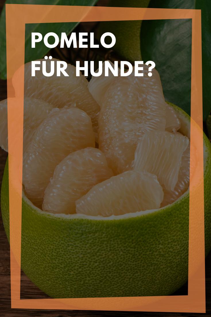 Durfen Hunde Pomelo Essen Gesundes Obst Oder Giftige Zitrusfrucht In 2020 Zitrusfrucht Gesundes Obst Giftig Fur Hunde