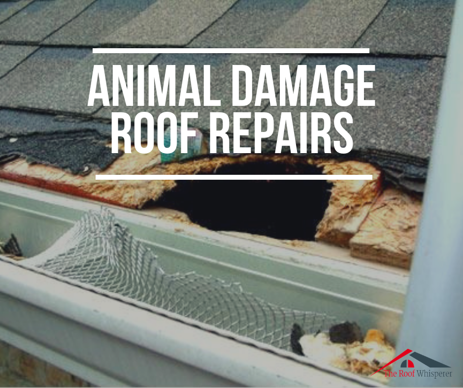 It Would Be Advisable To Look Out For Scratching Noises In The Attic And Animal Tracks Or Droppings The Roof Repair Roof Installation Skylight Installation