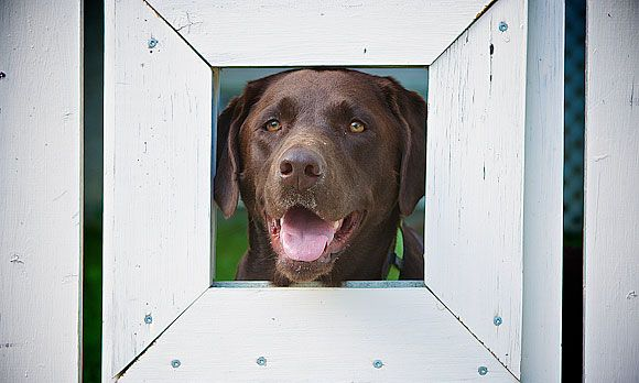 10 Pet Friendly Home Additions Pet Overlook Or Porthole C Stephen Kroeger Dog Fence Dog Window In Fence Pets