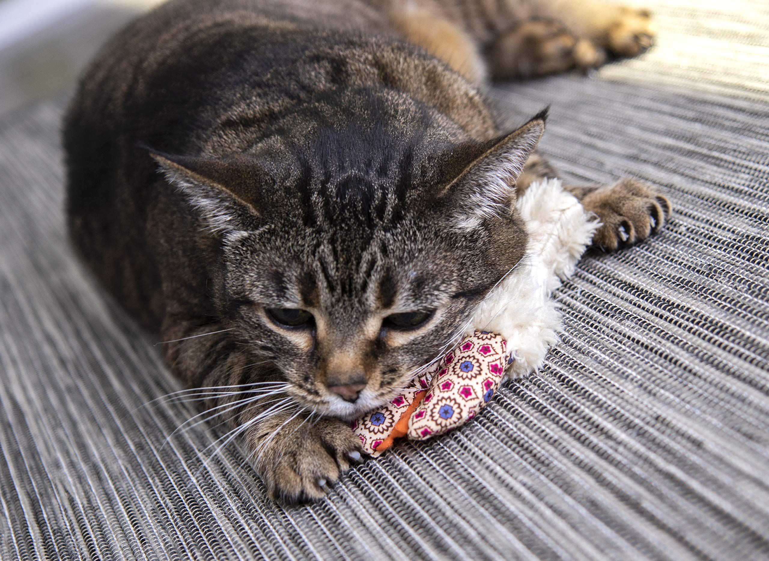 Petlinks Refillable Catnip Cat Toys Ad Refillable Sponsored Petlinks Catnip Toys Catnip Cat Toy Cat Toys Cats
