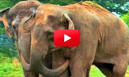 Shirley And Jenny Elephant Sanctuary Elephant Animals Wild
