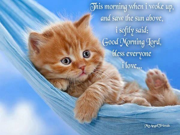 Good Morning Cute Good Morning Pictures Good Morning Cat Good Morning Images