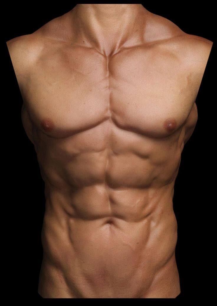 pecho abdominales | ANATOMÍA MASCULINA | Pinterest