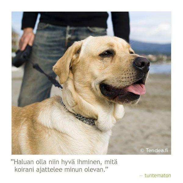 """""""Haluan olla niin hyvä ihminen, mitä koirani ajattelee minun olevan"""" #koirat #koira #dogs #sananlasku #aforismi"""