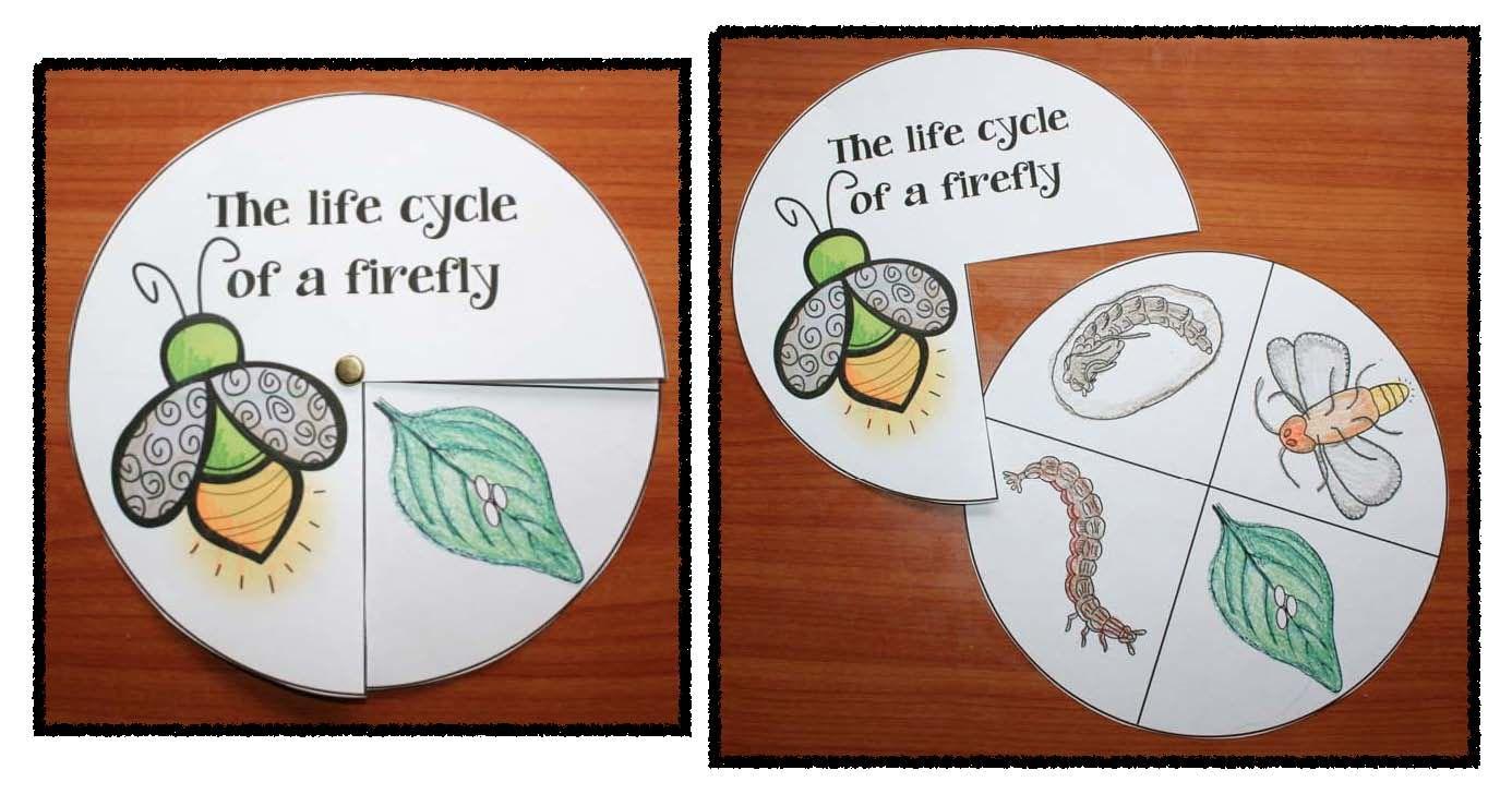 Firefly Fun Science Language Arts Math Activities Games Crafts Fireflies Craft Math Activities Life Cycle Craft