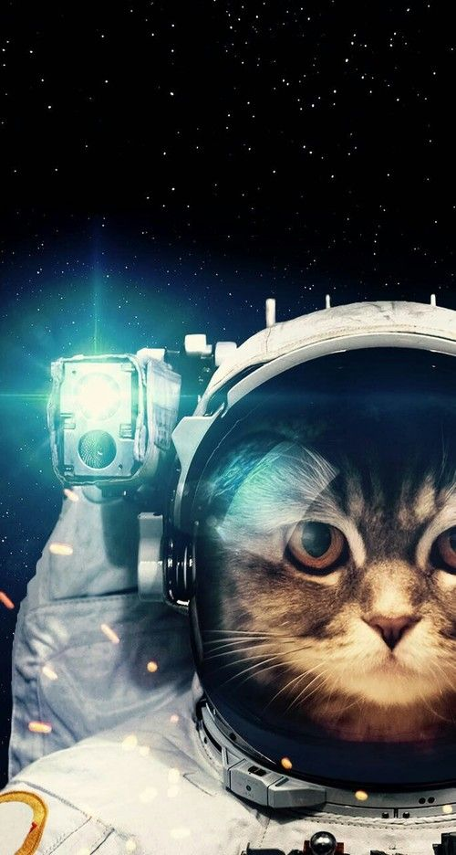 Space Background And Cat Image