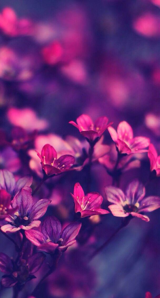 Permalink to Purple Flower Phone Wallpaper
