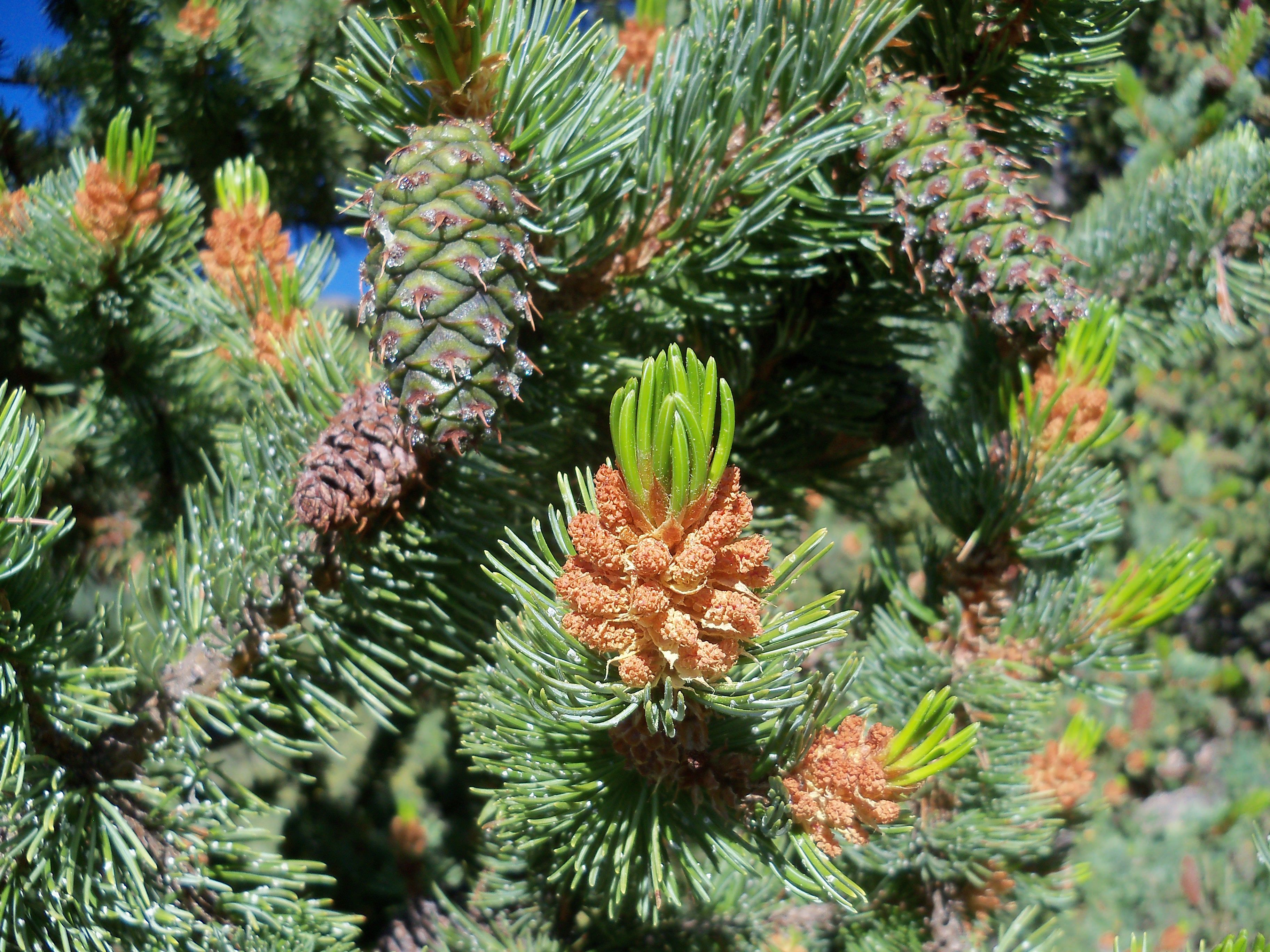 Dream Dream Fir, spruce, what dreams of Fir, spruce in a dream to see 100