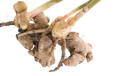ginger plant illustration - Google Search