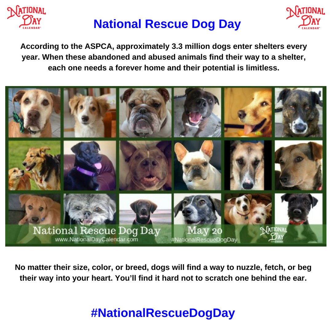 NATIONAL RESCUE DOG DAY May 20 National Day Calendar