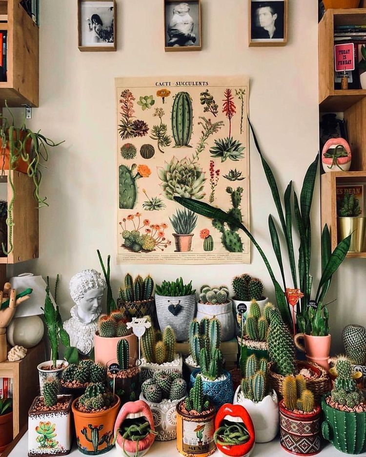How To Care For Indoor Succulents | Succulents Network