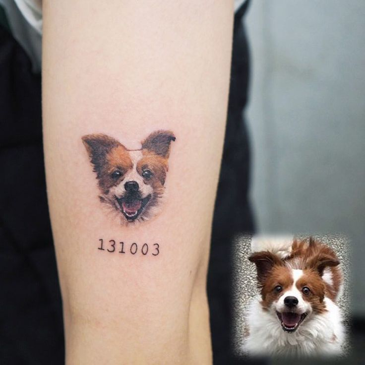 Tattoo artist Yammy, color and black and grey minimalistic pets tattoo | Seoul, Korea | #inkpplcom #tattooartist #minimalistic #realistictattoo #pets #dogs #cats #colortattoo #blackandgreytattoo #blackandgrey #minimalism