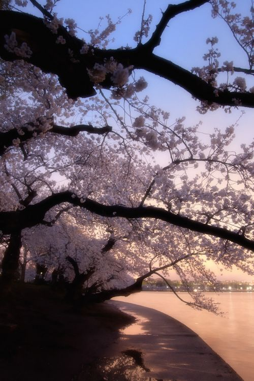 Blossoms Evening Landscape Photography Beautiful Nature Nature Photography