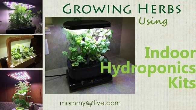 16 Best Indoor Hydroponic Grow Systems And Garden Kits 400 x 300