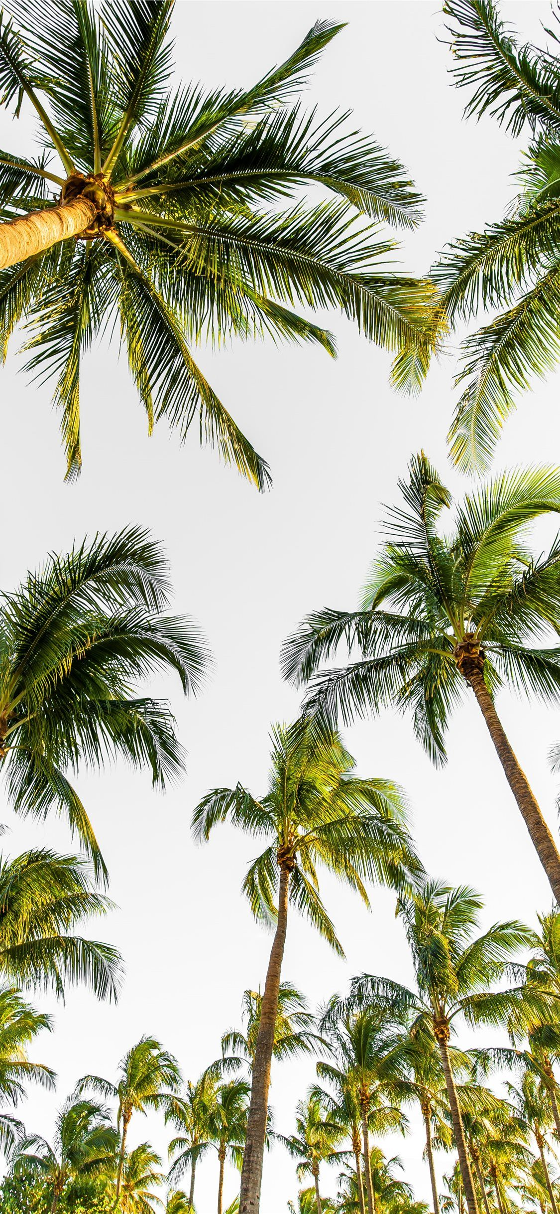 Free Download The Low Angle Photography Of Palm Trees Wallpaper Beaty Your Iphone Palm In 2020 Tree Wallpaper Iphone Pretty Wallpaper Iphone Beach Wallpaper Iphone
