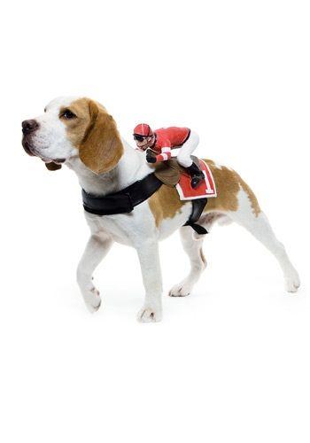 Jockey Dog Costume Funny Halloween Costumes For Pets Pet