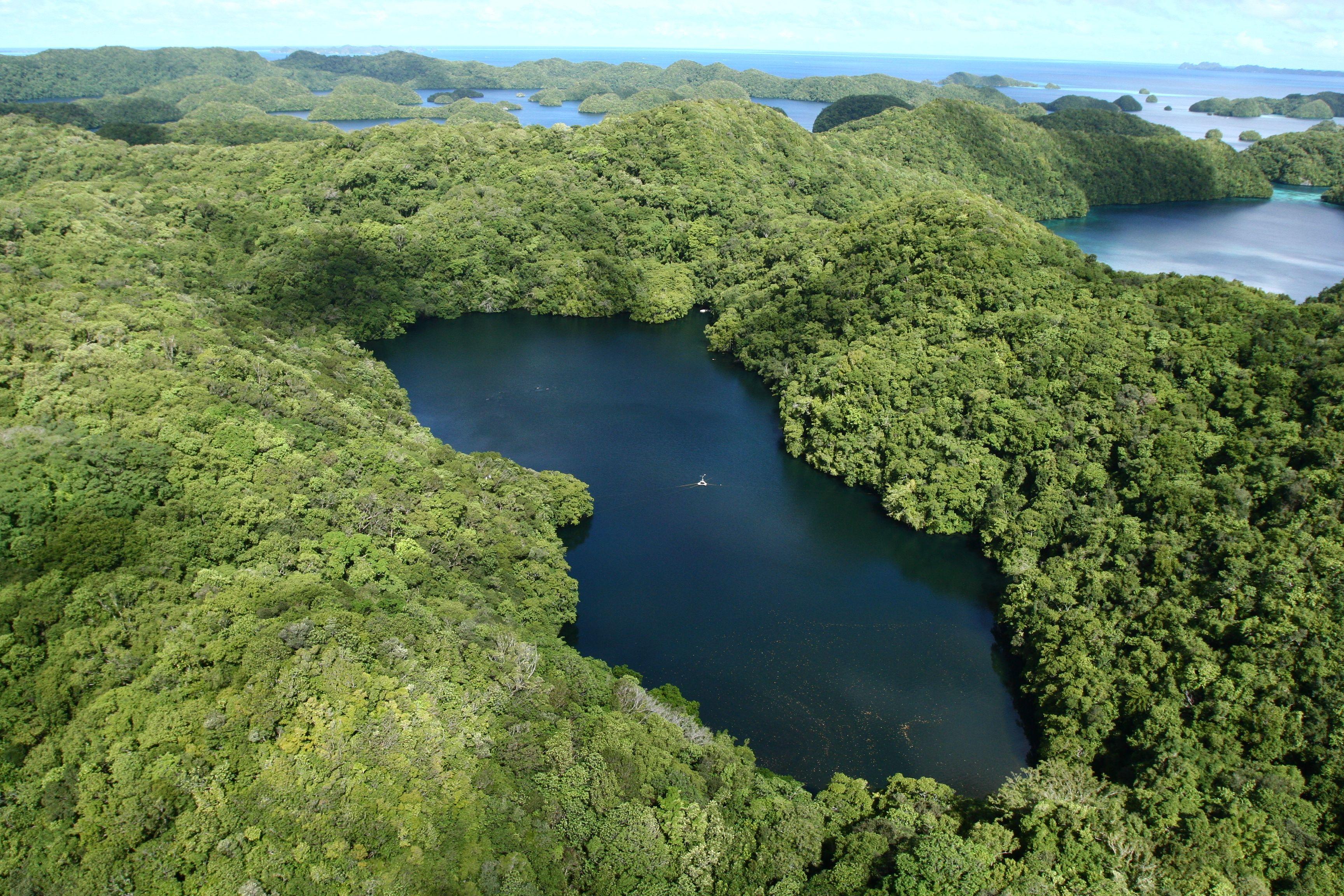 Design Bank Palau.Micronesia Travel Rock Islands Of Palau Travel Jellyfish