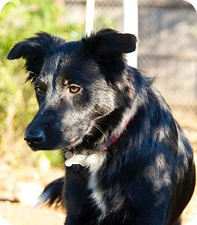 Corning Ca Border Collie Mix Meet Maddie A Dog For Adoption Dog Adoption Border Collie Mix Border Collie