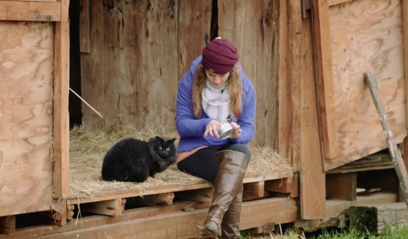 3 Awesome Programs That Are Helping Unadoptable Cats Thrive By Giving Them Jobs Feral Cats Cat Presents Cats