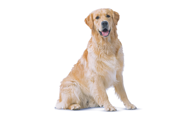 Tips for keeping your pet in tip top shape - Independent.ie