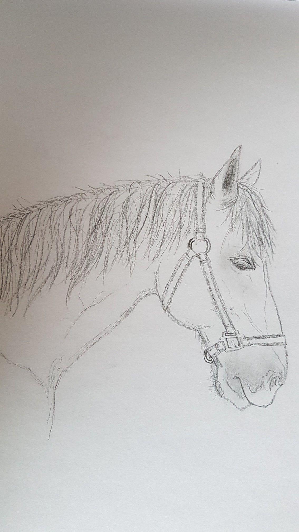 Paard Halster Potlood Tekening Zijaanzicht Manen Bles Dieren Paard Tekeningen Paardentekening Paard Halsters