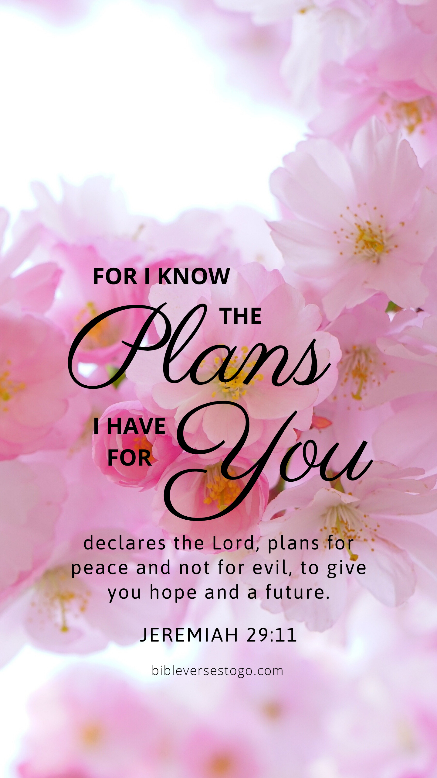 Pink Bloom Jer 2911 Christian iphone wallpaper, Bible