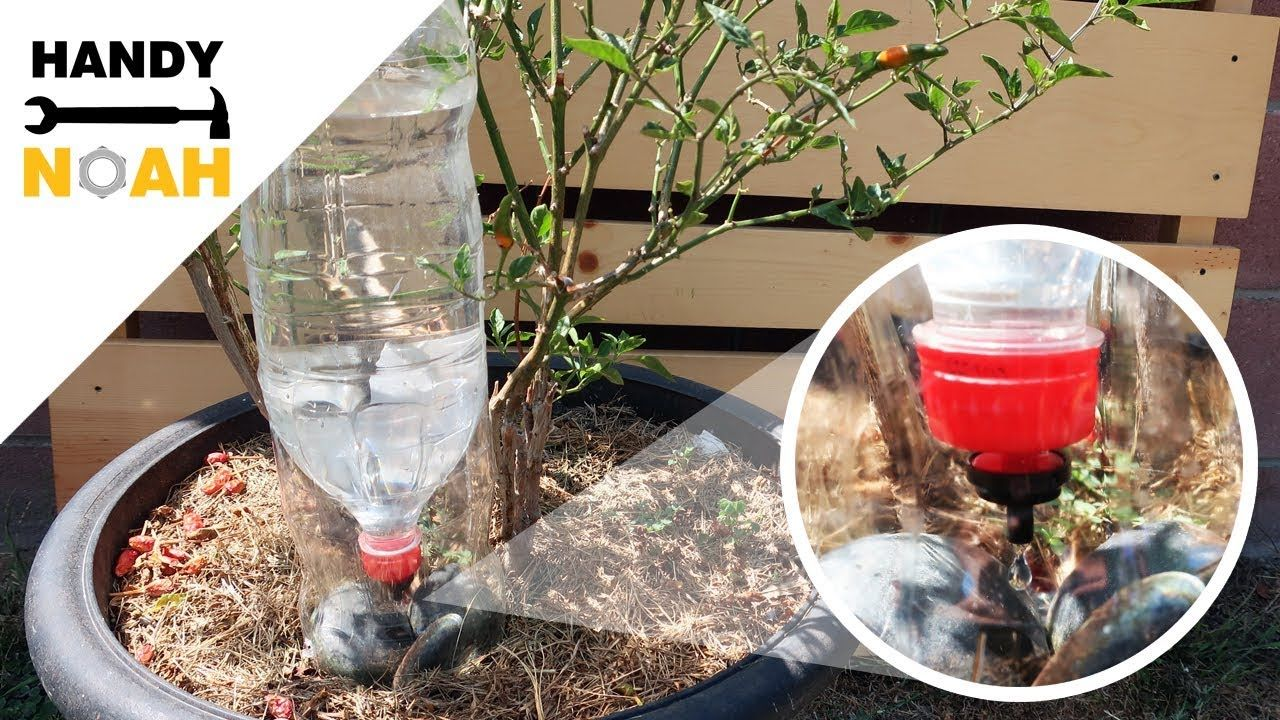 How To Make A Gravity Drip Irrigation Using Common Soda Plastic