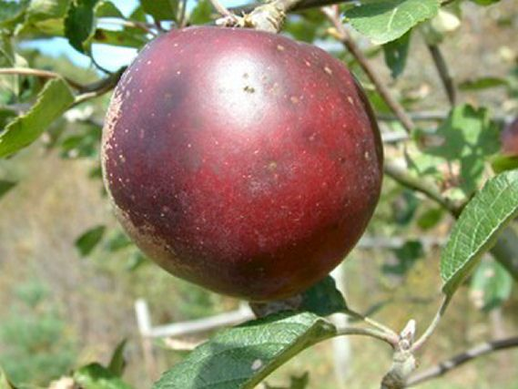 Big Horse Creek Farm Online Source For A Wide Variety Of