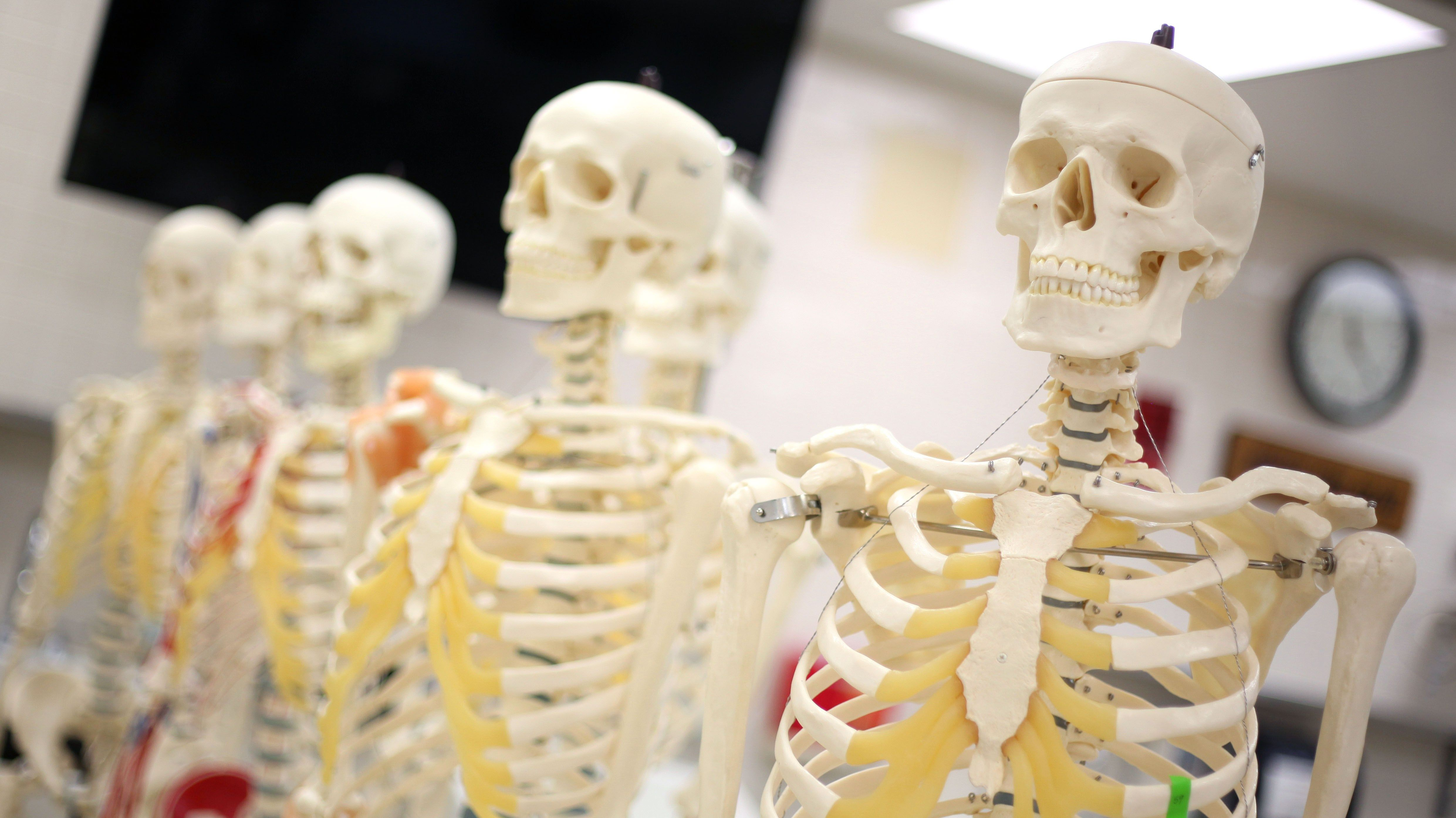 In Body Donation, The Dead Teach The Living — The Hub@TTU ...