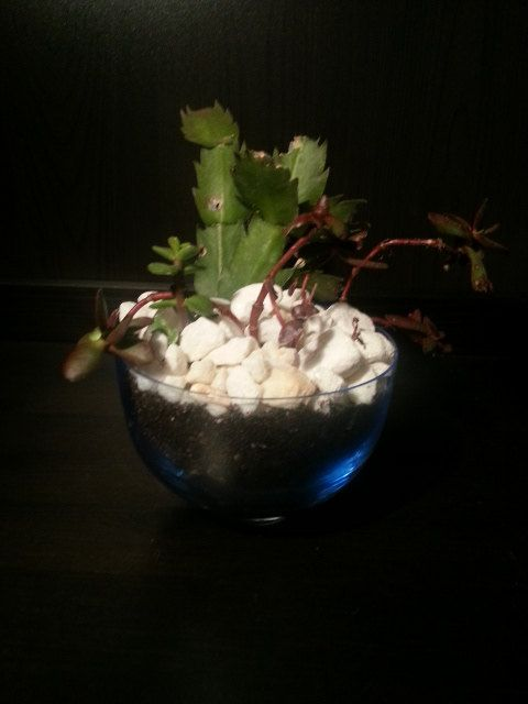 Succulent terrarium blue glass bowl in the Glass by UrbanSucculent, $43.00