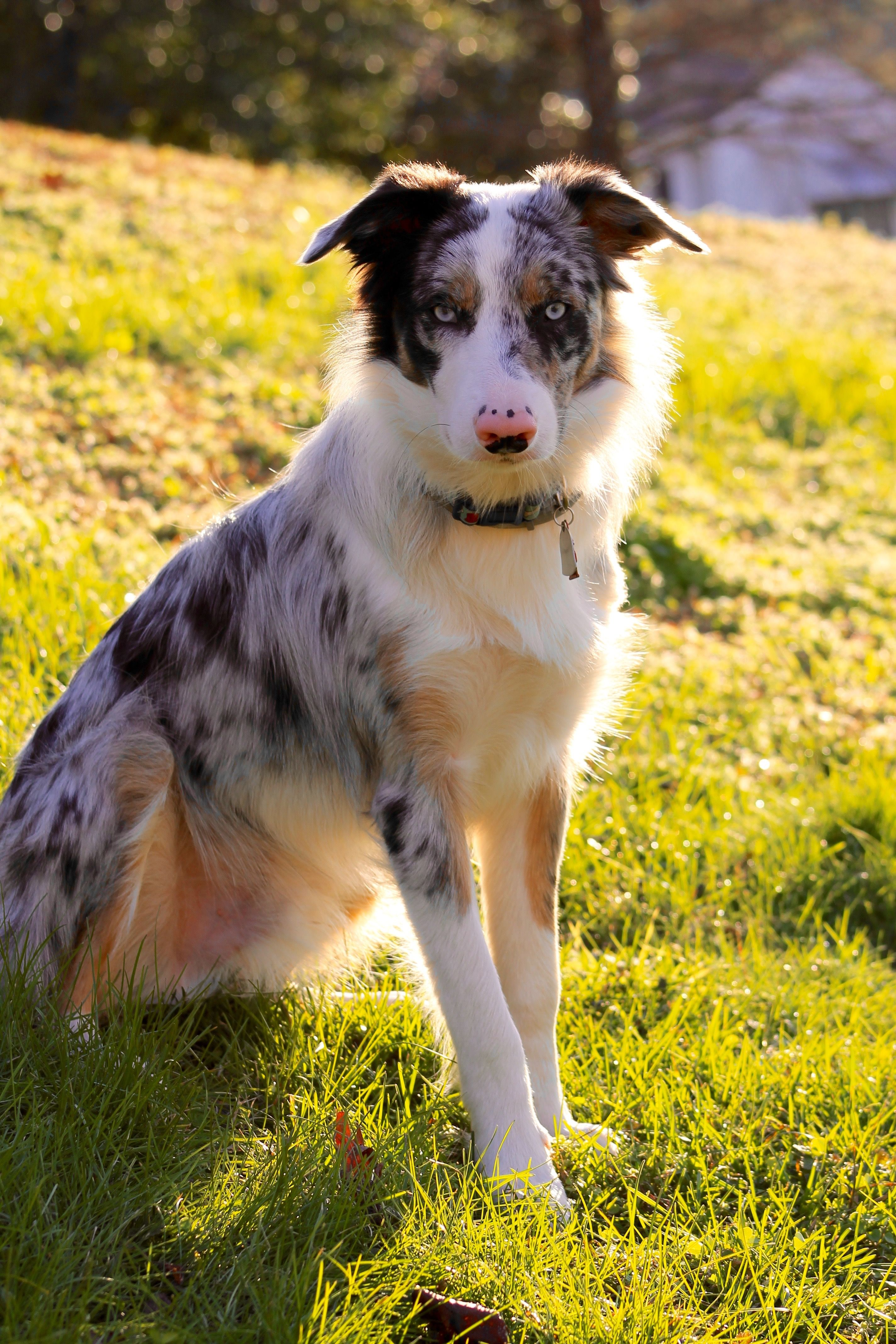This Dog Is So Beautiful I Want To Adopt Her So Badly Rough