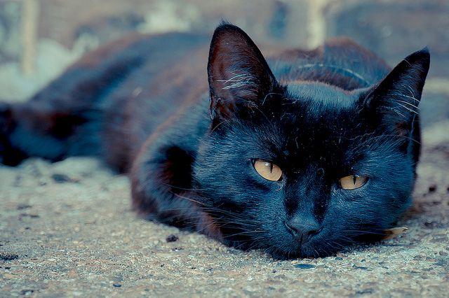 ♥Black cat   Nap