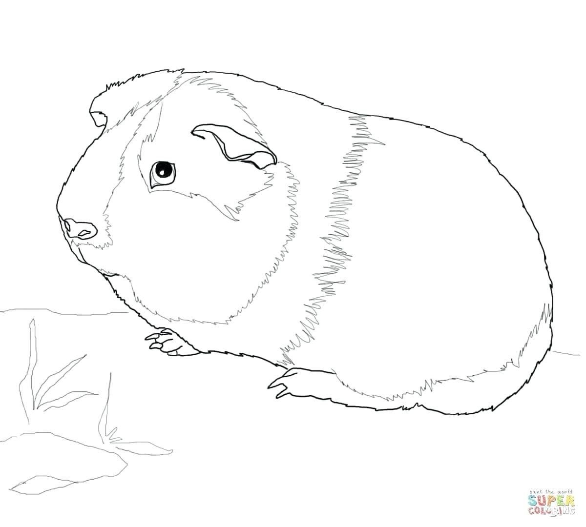 Guinea Pig Coloring Pages Online Trend