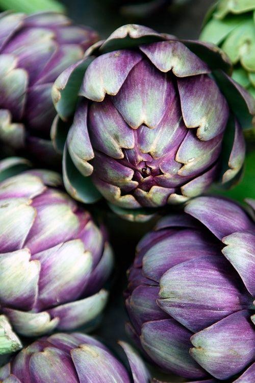 Artichaut garden pinterest couleur violet artichaut for Artichaut plante grasse