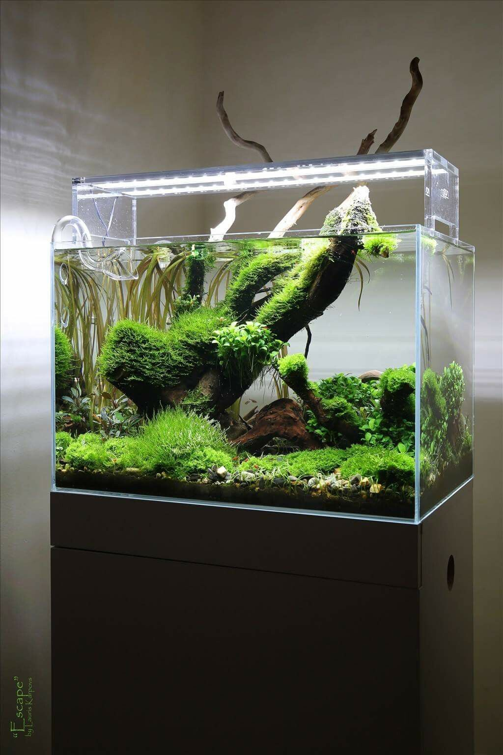 planted aquarium nano tank aquascape by lauris karpovs
