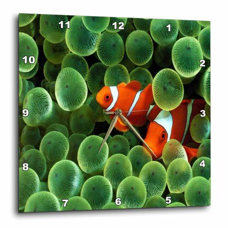 3drose 2 Clown Fish Among Green Sponge Wall Clock 13 By 13