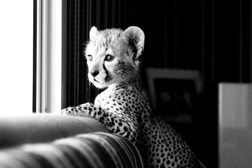 """""""what's going on out there"""" baby cheetah 
