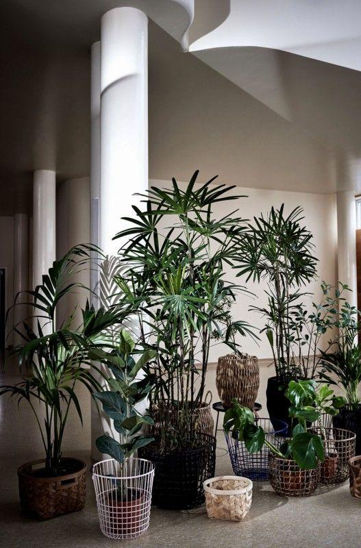 Pflanzen pflanzen zum leben pinte for Pflanzengestaltung garten
