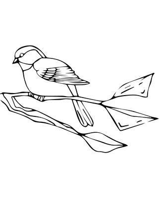 Black Capped Chickadee Coloring Page Supercoloring Com Black Capped Chickadee Deer Coloring Pages Coloring Pages
