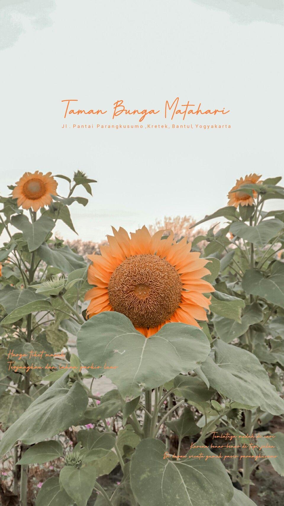 Pin Oleh Denistyap Di A My Edit Bunga Fotografi Poster Bunga