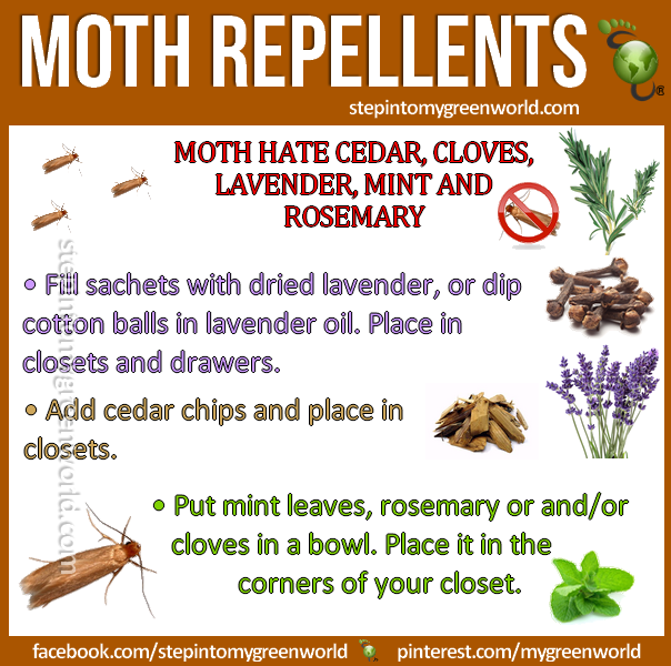 Pin By Chasing Nature On Natural News Moth Repellent