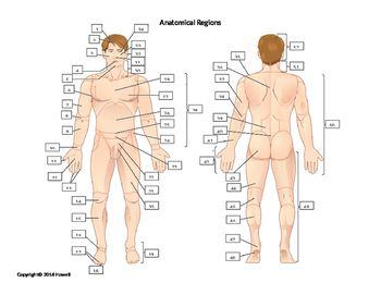 Orientation And Directional Terms Anatomy Quiz With Popular Of