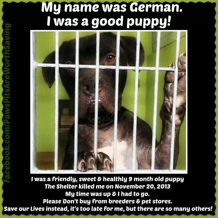 My name was German. RIP November 20, 2013 Animal