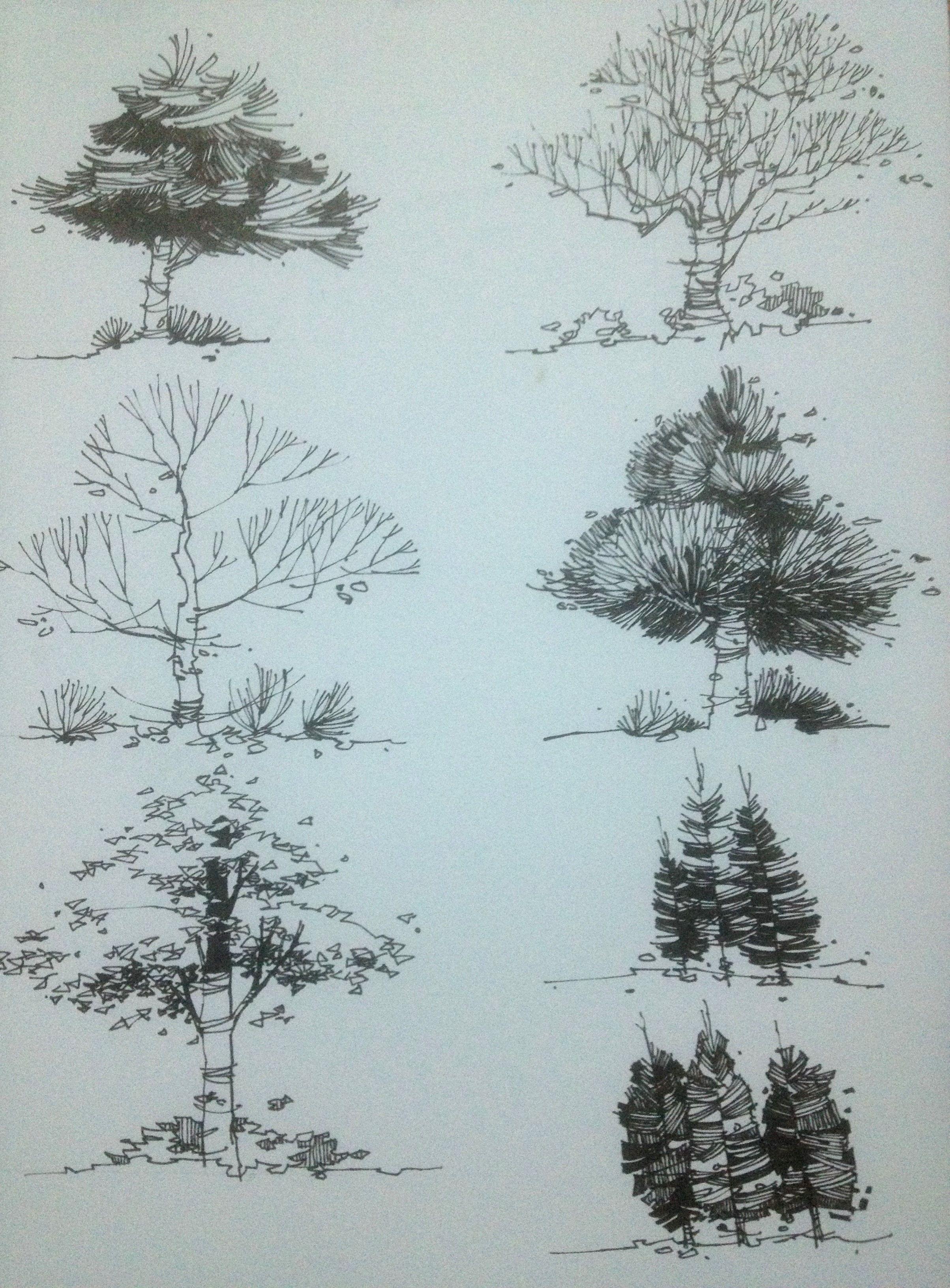 Tree rendering - Tuan Anh Dang                                                                                                                                                                                 Mais