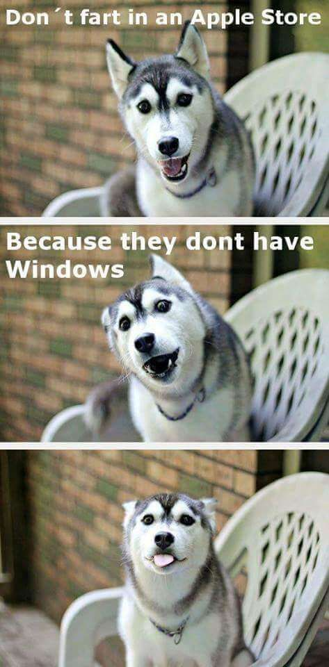 37 Funny Puns That Are So Bad They Re Simply Hilarious Funny Animal Jokes Funny Puns Funny Dog Jokes