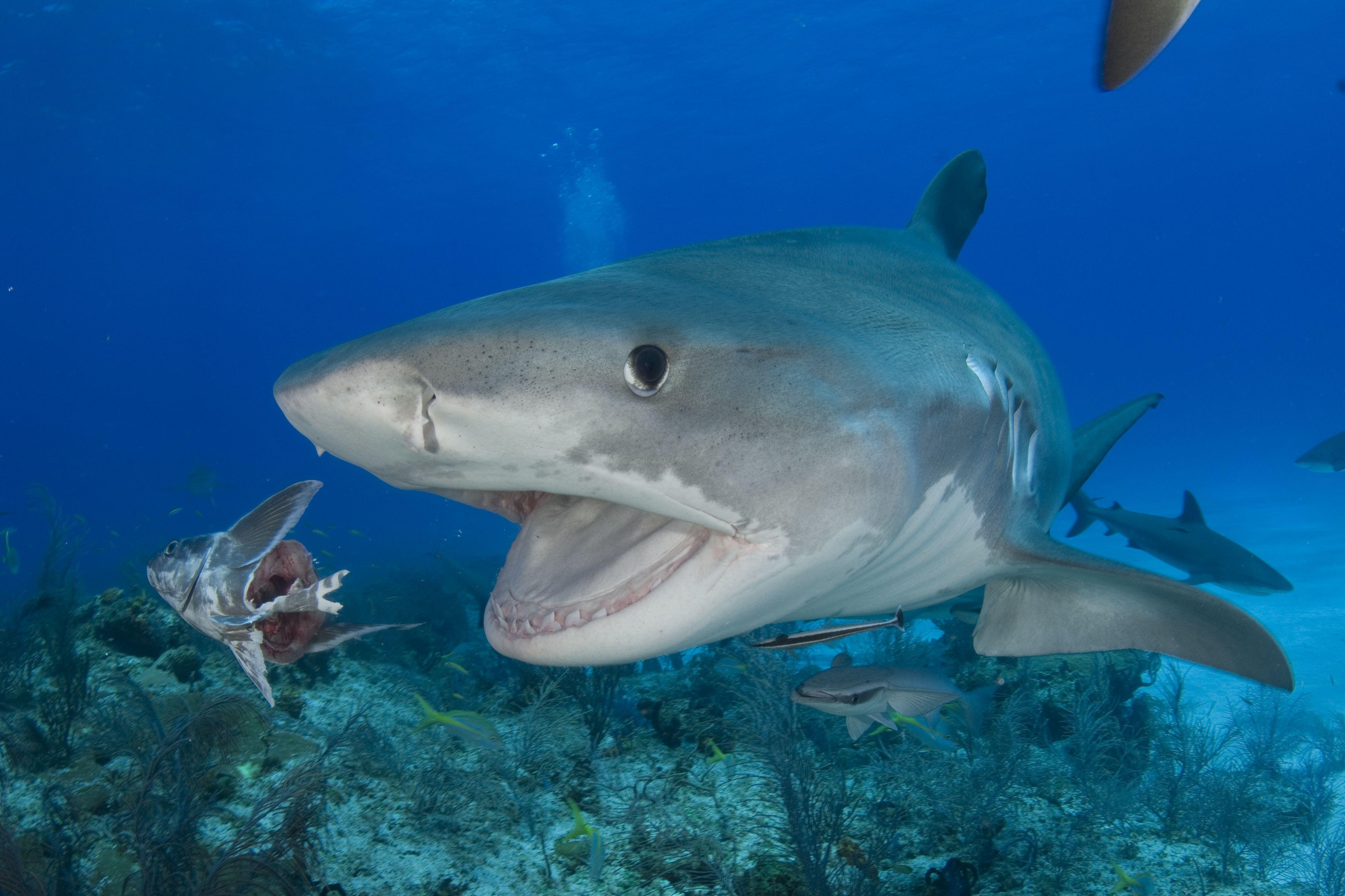 акулы фото с названиями полностью