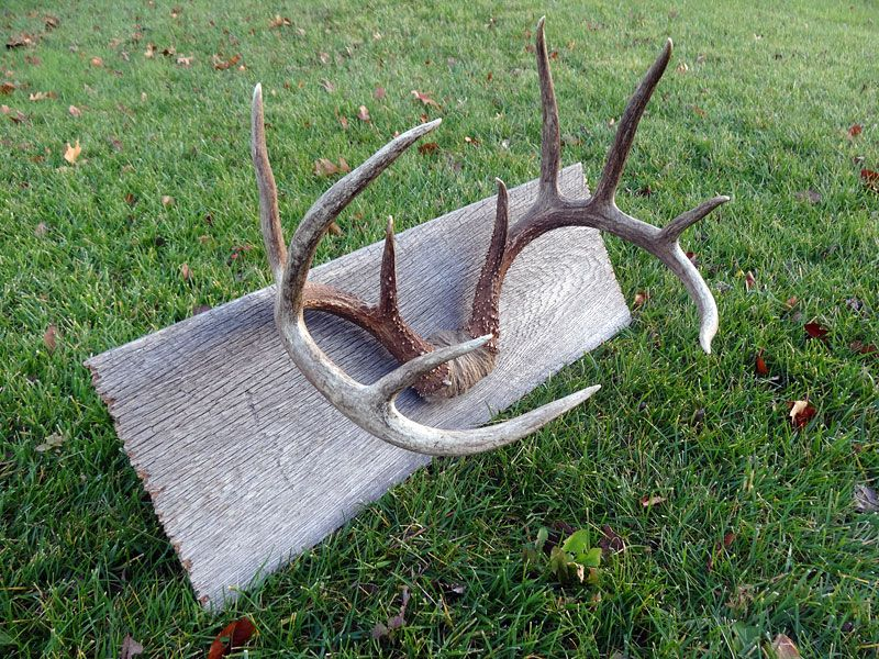 how to The Antler Mount....my hubby would like this all