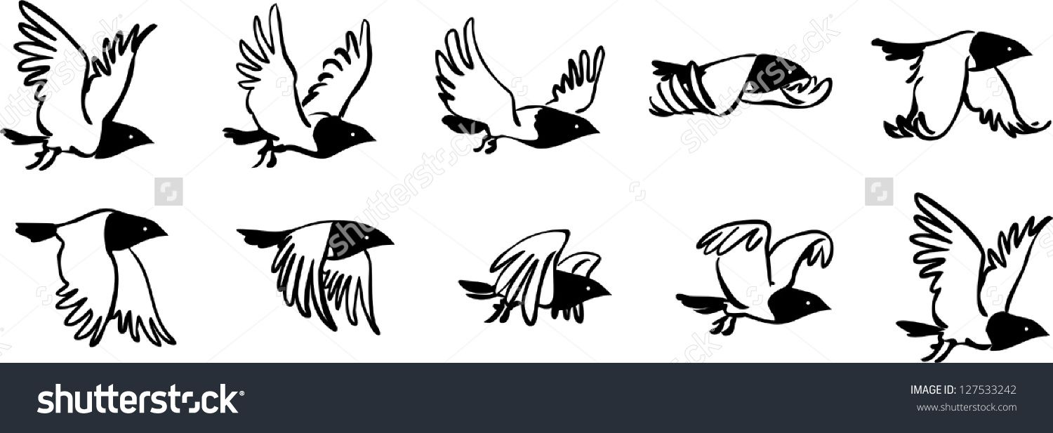Image Result For Bird Flight Sequence Fly Drawing Birds Flying