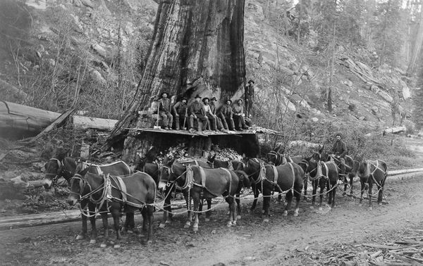 21 Amazing Photos of Logging at the Turn of the Century - Old Photo Archive - Vintage Photos and Historical Photos
